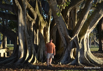 Huge Banyan Tree