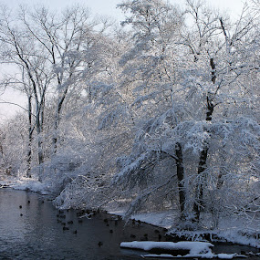 One Winter Morning by Maureen Rueffer - Landscapes Weather (  )