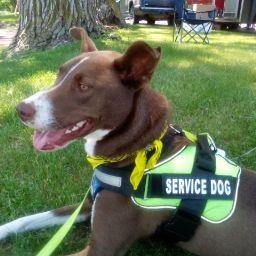 user Dianna McD apkdeer profile image