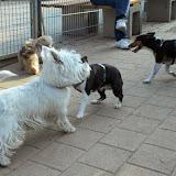 Kleinhundegruppe Mittwoch 17.30 Uhr - DSC_0019.JPG