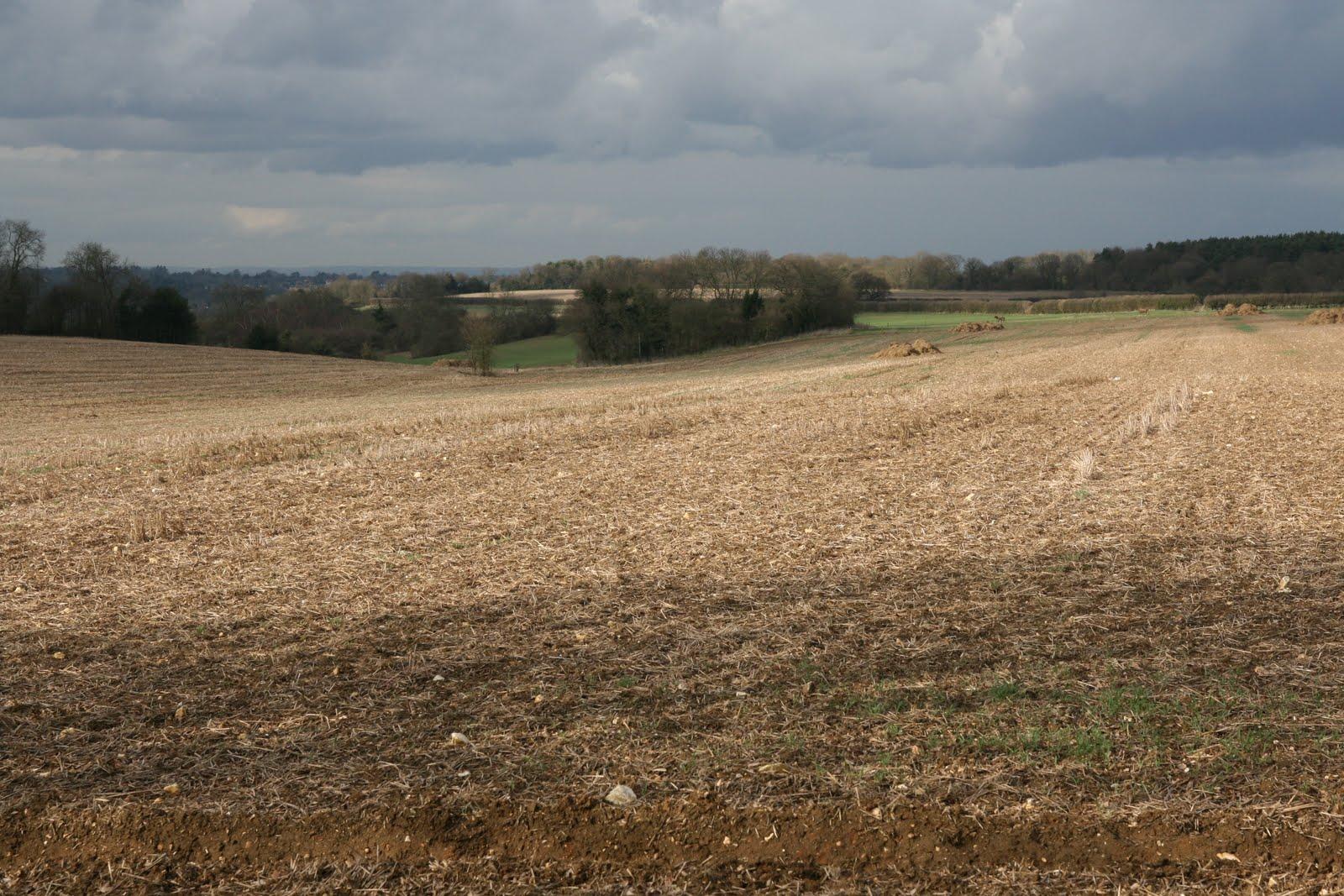 1003 008 Coulsdon, England Across the fields
