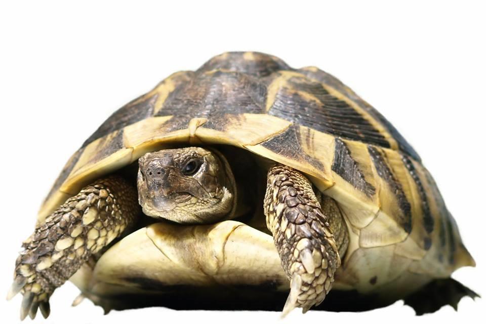 [Alimentazione+tartarughe+terrestri+-+2%5B3%5D]