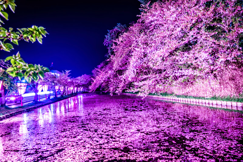 Hirosaki Park cherry blossoms illumination photo20