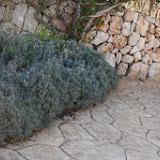lavanda-garten_03-640.jpg