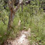 Pindar Cave Track (19572)