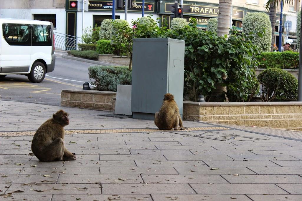 gibraltar - Carregar a bateria da moto até... Gibraltar IMG_4534