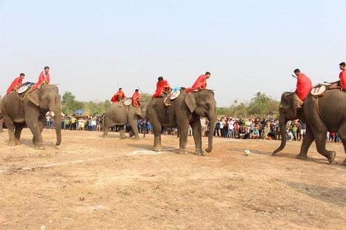 Khu du lịch Buôn Đôn sôi nổi cùng lễ hội voi 7