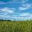 Tiffanee Siri Ellman's profile photo