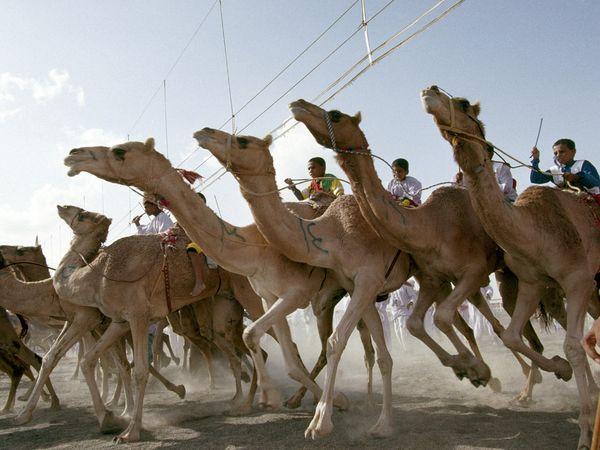 Oman - camel race (photo credit: National Geographic magazine)