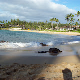Hawaii Day 7 - 100_7953.JPG