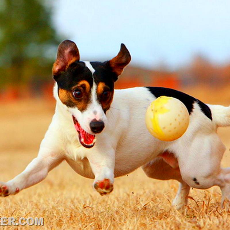 50 поразительных фактов о собаках