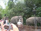 Elefanten auf dem weg zur Fütterung