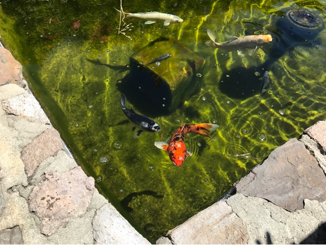 Robert Sinskey Vineyards Exterior/Koi pond