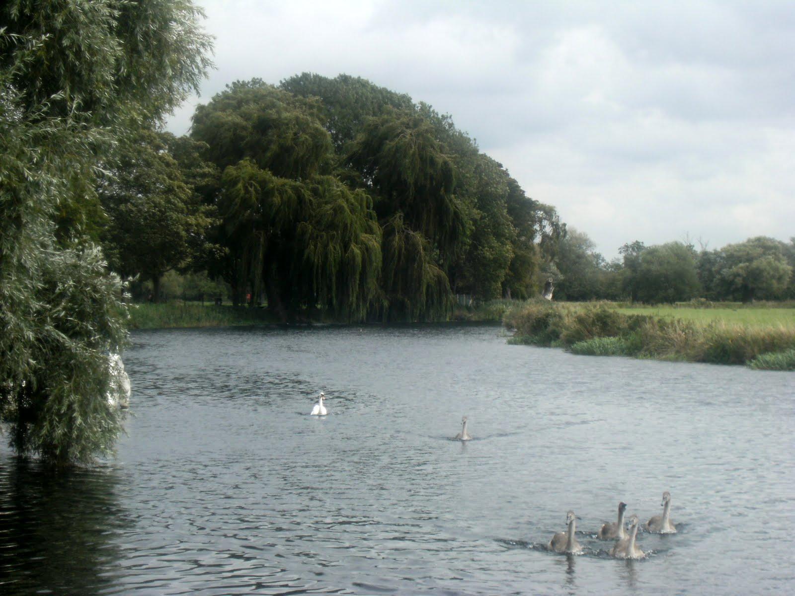 DSCF9415 River Great Ouse near Huntingdon