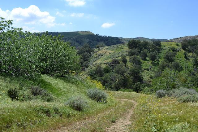 oak spattered hills
