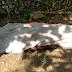 संदिग्ध परिस्थितियों में युवक की मौत  BNL24NEWS  कमलेश सिंह चौहान जिला ब्यूरो चीफ सीधी