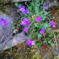 primavera-luminasioIMAG0194.jpg