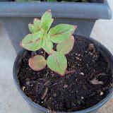 Gardening 2010 - 101_1457.JPG