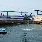 El show de los delfines