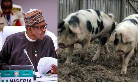 Aso Rocks on fire As Association of Yoruba Pig Farmers Demand Pig Colony in Nigeria