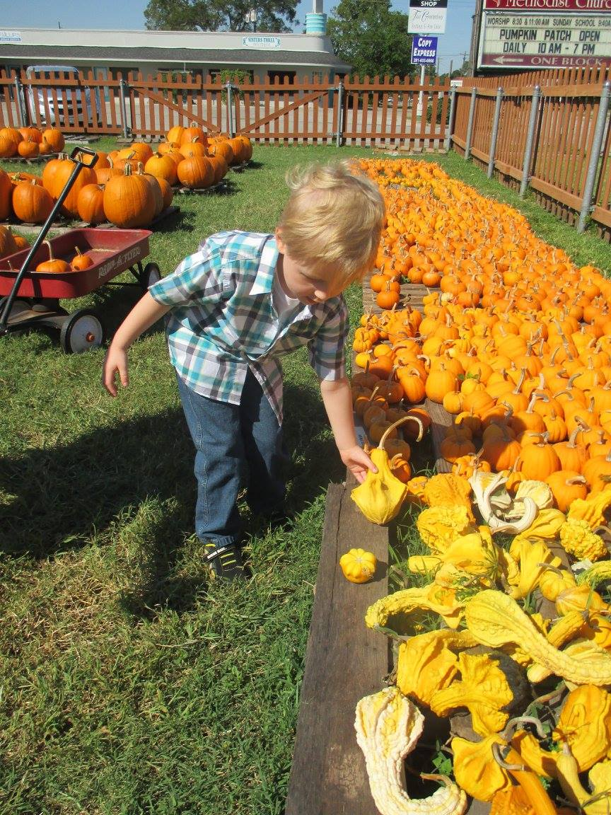Pumpkin Patch 2015 - 12141088_10153209194972404_8123825775134776654_o.jpg