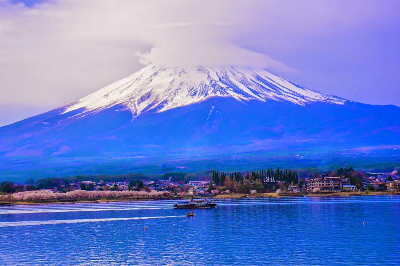 河口湖 長崎公園 桜 写真9