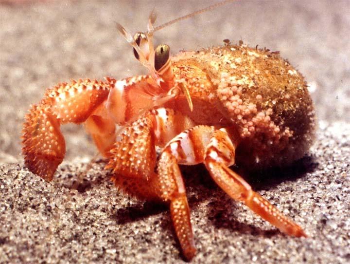 Ocean Crabs Video For Kids