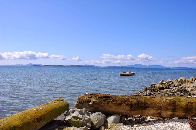 Off the shores of Taylor Shellfish Farm. / Credit: Bellingham Whatcom County Tourism