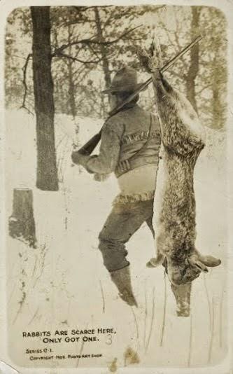 Um coelho gigante em cartão postal de 1909