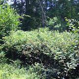 Massif de ronces fréquenté par A. hyperantus, A. paphia, M. athalia, Inachis io, M. jurtina, S. ilicis, etc. Les Hautes-Lisières (Rouvres, 28), 30 juin 2011. Photo : J.-M. Gayman