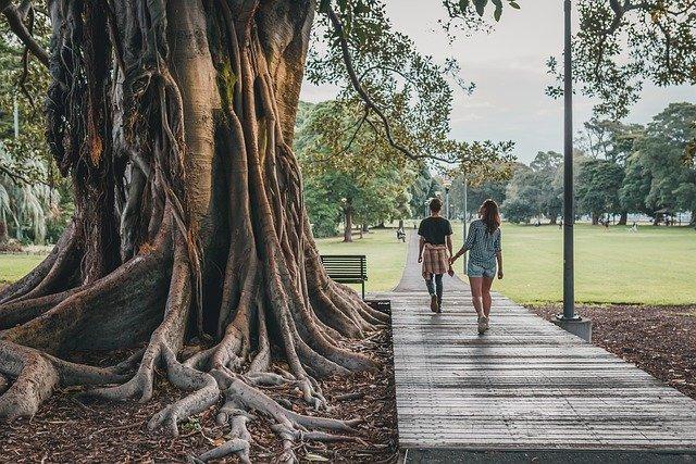 tree park nature