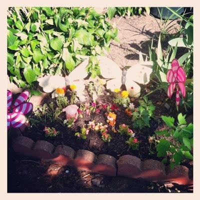 annuals in a small urban garden