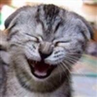 Saadar Lt's avatar