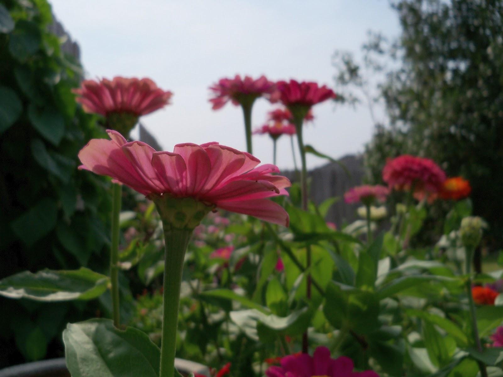 Gardening 2011 - 100_8638.JPG