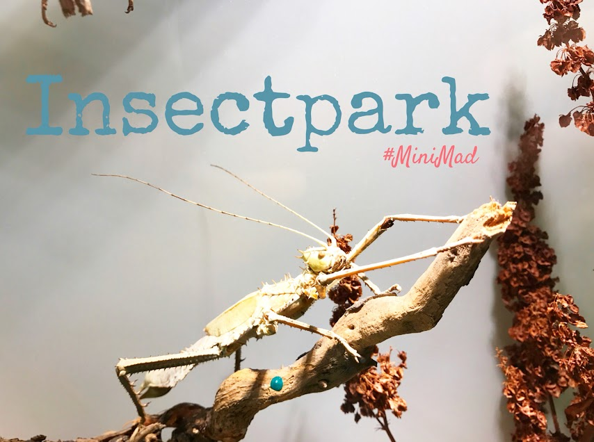 insectpark-museo-insectos-madrid-ocio-familia-madrid