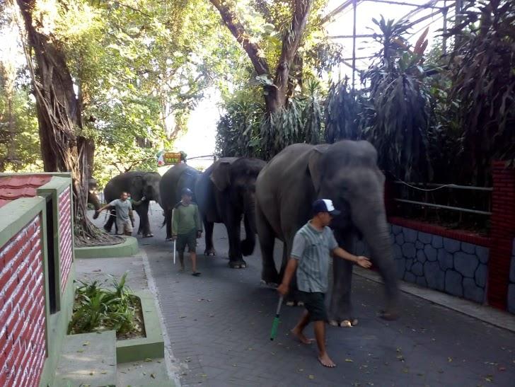 Corona Tak Pengaruhi Pakan Satwa GL Zoo