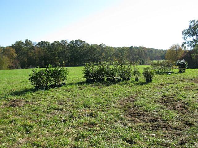 Guilford Salt Meadows Sanctuary Planting - IMG_7808.JPG