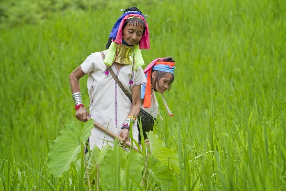 Padaung Hill Tribe, Thailand