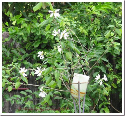 12-08-daisy-tree