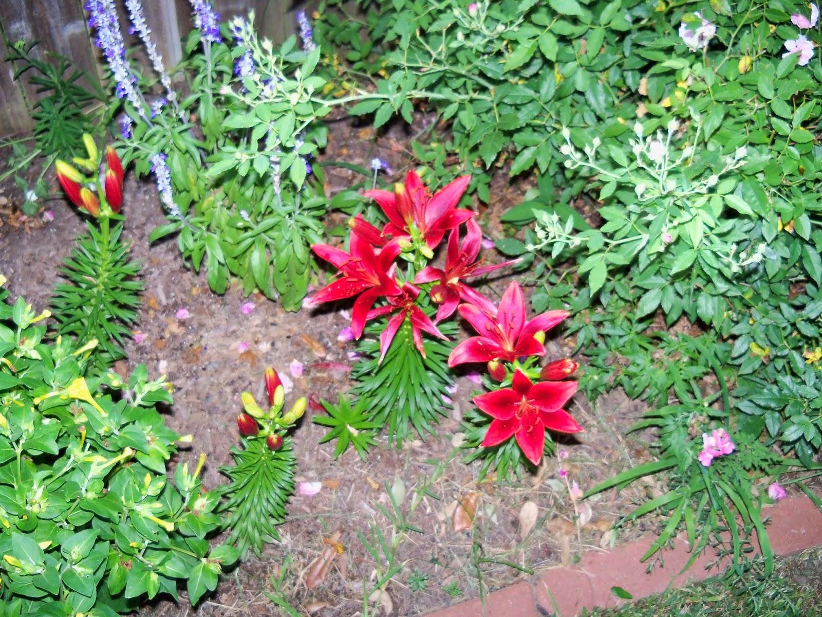 Gardening 2014 - 116_3139.JPG