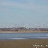 01-19-13 Hagerman Wildlife Preserve and Denison Dam - IMGP4106.JPG
