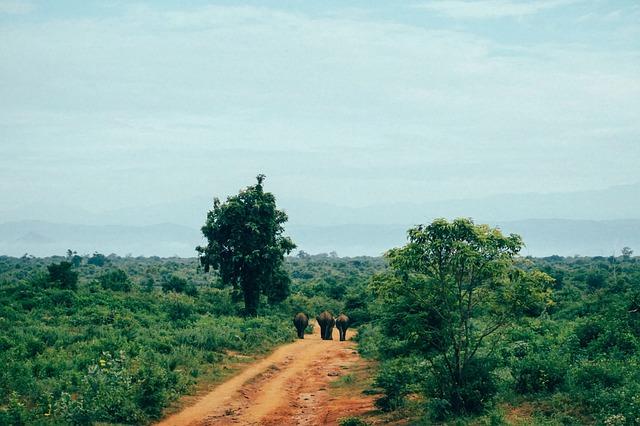 Udawalawe national pari sri lanka