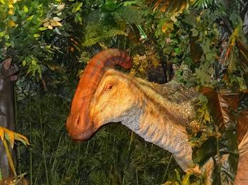 2018.04.30-003 Parasaurolophus