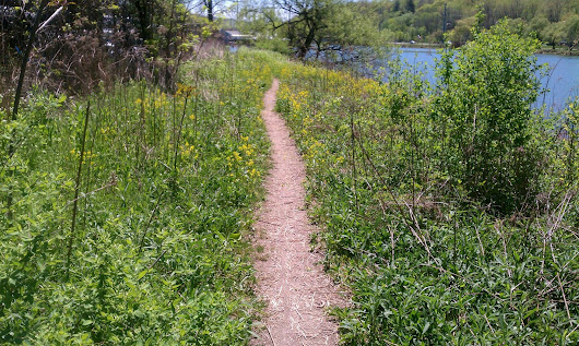 Trail By Cayuga Lake, Photo by Janice Brodowsky