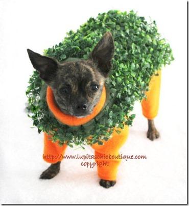 disfraces divertidos para perros  (24)