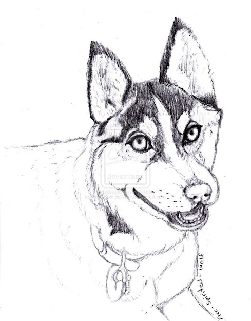 Husky Coloring Pages Realistic Husky Coloring Pages Animal Printable  Realistic Husky For Kids