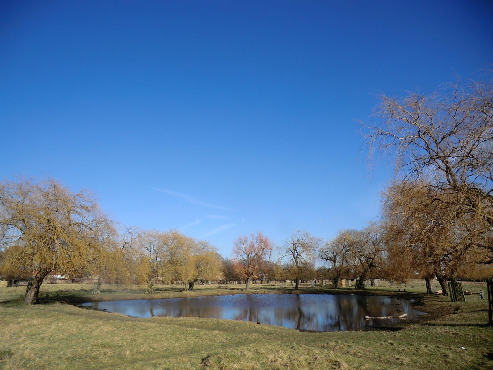 CIMG6775 Hampton Hill Pond, Bushy Park