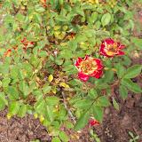 Gardening 2010 - 101_1064.JPG