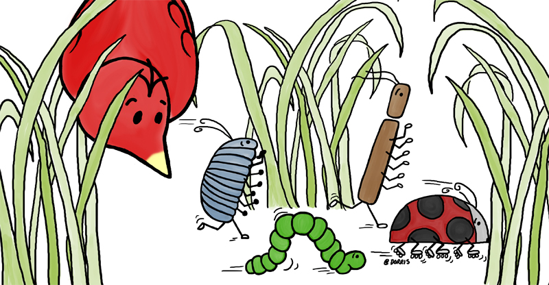 Birds like wrens, robins and mockingbirds eat bugs.