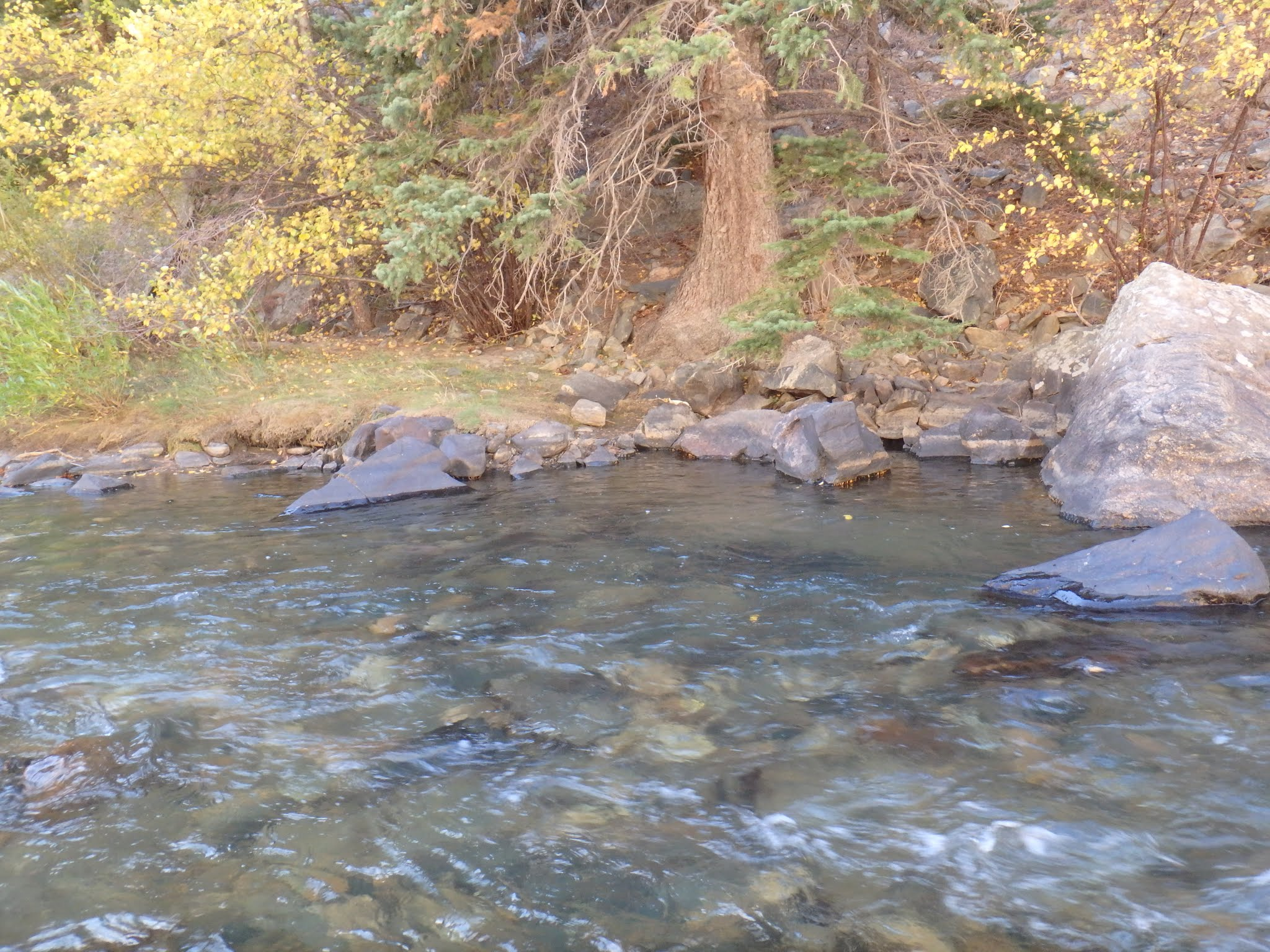 Clear creek dave weller 39 s fly fishing blog for Clear creek fishing report